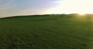 Luftaufnahme von Kühen, die auf dem Feld weiden lassen video