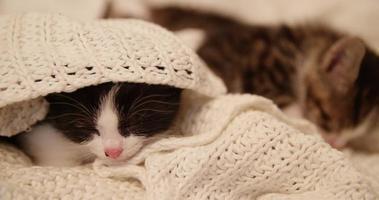 schläfriges Kätzchen unter einer kuscheligen Wolldecke