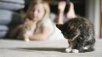 um gatinho se limpando, com uma garotinha acariciando um gatinho ao fundo video
