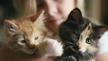 close-up de dois gatinhos sendo segurados por uma garotinha video