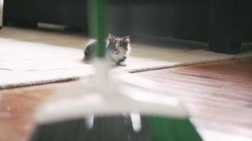 dois gatinhos assistindo e perseguindo uma vassoura varrendo o chão video