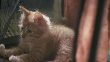 un gatito acostado dentro de una casa de gatitos con paredes de malla