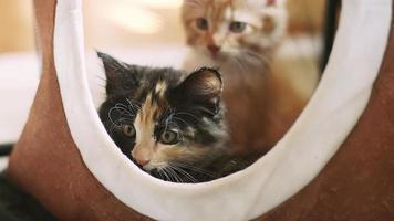 dois gatinhos sentados em uma casinha e um boceja video