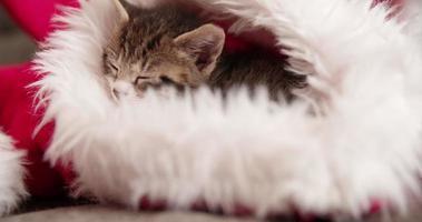 chaton endormi dans un bonnet de noel rouge et blanc
