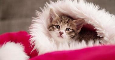 süßes getigertes Kätzchen in einer Weihnachtsmütze, die Sie ansieht