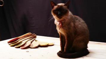 longevidade dos gatos siameses video