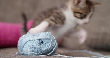 Kätzchen, das neben Wollknäuel auf Couch schaut video