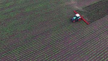 il trattore tira il coltivatore del campo: che taglia le erbacce. vista aerea