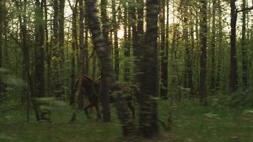 giovane ragazza a cavallo nella foresta