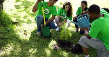 attivisti ambientali che annaffiano un nuovo albero nel parco video
