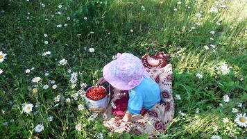 niña come fresas silvestres en el prado.