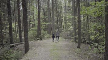 madre e hijo caminando en el bosque ontario naturaleza canadá video