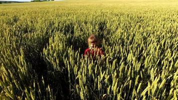 Girl child walks on the wheat field. Wheat born a tall and thick. video