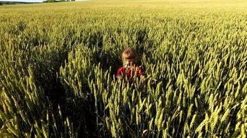niña camina en el campo de trigo. un trigo nacido alto y grueso. video