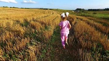 menina correndo pelo campo. no campo, a colheita do trigo já está colhida. a câmera com Steadicam se move atrás da garotinha video
