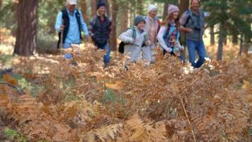 Familia de varias generaciones caminando en el bosque, enfoque selectivo video
