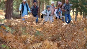 Mehrgenerationen-Familienwandern im Wald, selektiver Fokus video