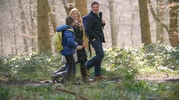 Toma panorámica de una familia de cuatro personas caminando por el bosque video