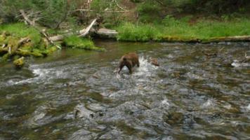 Hund hat Spaß im Fluss zu spielen
