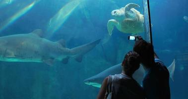 coppia ammirando tartaruga marina nuotare con lo squalo