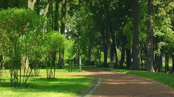 mulher correndo no parque. mulher de aptidão correr ao ar livre. treinamento de corredor no parque video