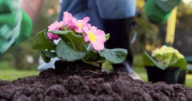 seção intermediária de uma mulher que faz jardinagem video