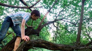 muchacho adolescente sube a un árbol viejo. el niño es realmente como trepar a un árbol.