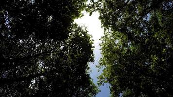Wald, Bäume, Himmel und Sonne, Kameraauto, 4k