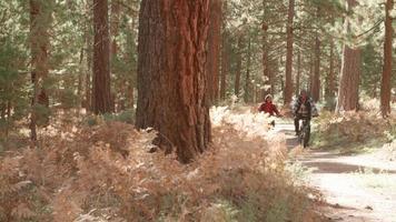 Senior pareja negra en bicicleta hacia la cámara en un sendero forestal