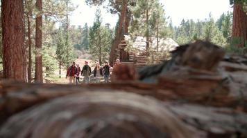 Seis amigos pasan por la cabaña de troncos en un bosque hacia la cámara video