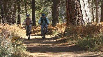 coppia senior in sella a biciclette su un sentiero nel bosco, colpo palmare video