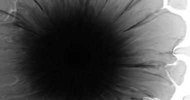 oeil de fleur d'encre