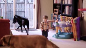 il bambino getta il suo bicchiere antigoccia sul pavimento dopo che un cane lo ha leccato e cammina per il soggiorno
