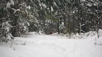 cavalos selvagens na floresta de inverno video