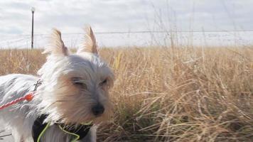 cane che corre sul percorso da vicino