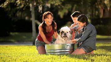 Bulldog mascota aseo por familia caucásica video