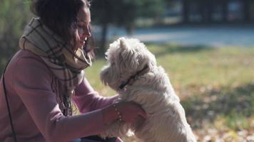 brincando com o cachorro. cachorrinho alegre e cheio de energia