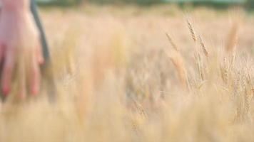 mano della donna che attraversa il grano