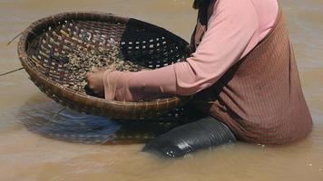 Mujer clasificando almejas de una canasta de bambú, manteniéndola en tela krama