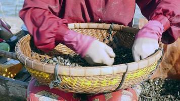 Mujer ordenar almejas de río de las rocas en una canasta de bambú