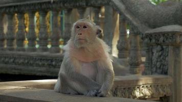 macaco sentado quieto em um corrimão de pedra