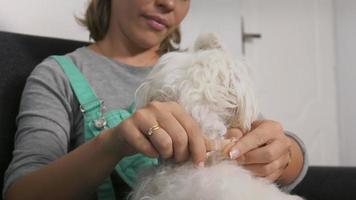 proprietario del cane donna che mette collare antipulci per accarezzare