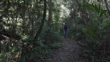donna che cammina sul sentiero nel bosco nella giungla video