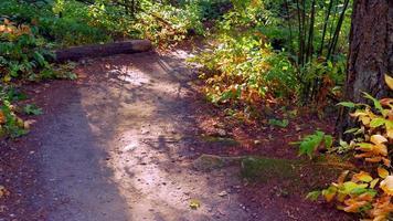 mulher ativa caminha por um belo caminho na floresta, paisagem de cura video