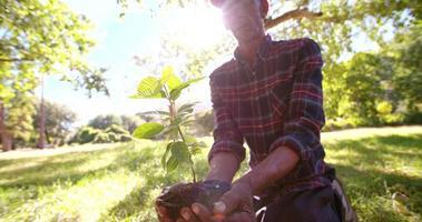 suolo e luce solare per un nuovo albero primaverile