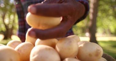 contadino che controlla patate fresche