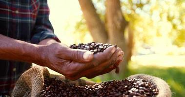 cosecha de granos de café de la finca, tostados y listos