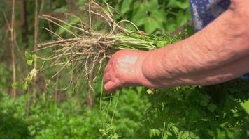 mão segurando ervas verdes.
