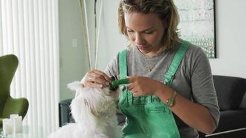 donna che pulisce i denti della bocca del cane con lo spazzolino da denti video