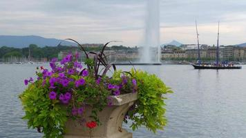 Jet D'eau Fountain and flowers at Geneva Lake, Switzerland